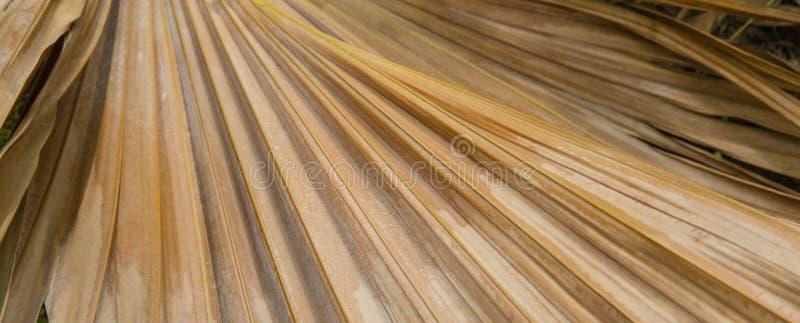 干燥棕榈树叶子背景 库存照片