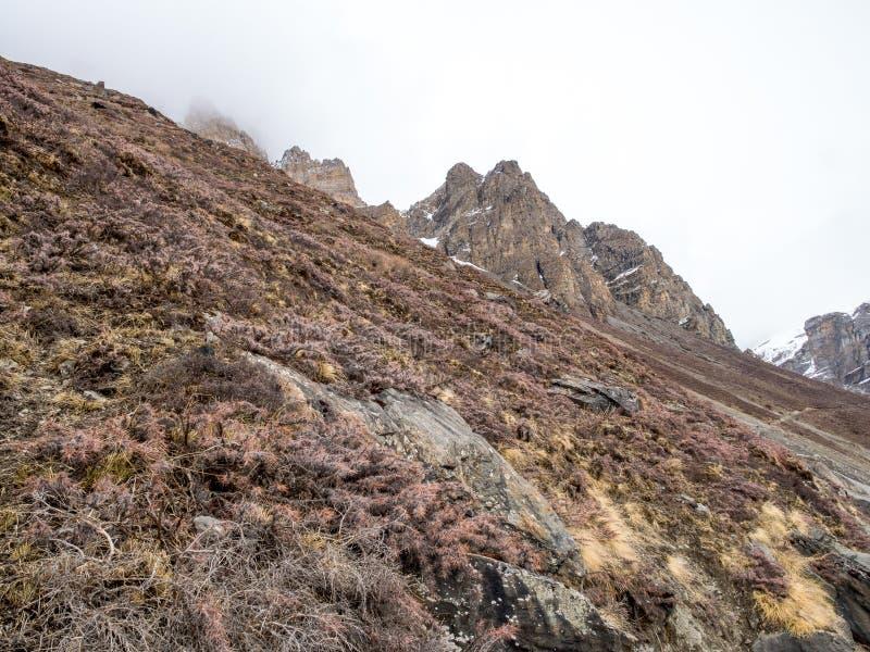 干燥植物和草甸山小山的在农村原野区域 免版税库存照片