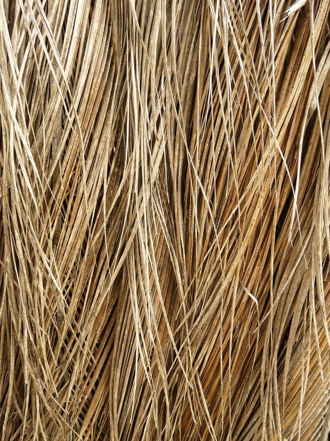 干燥椰子叶子 免版税库存照片