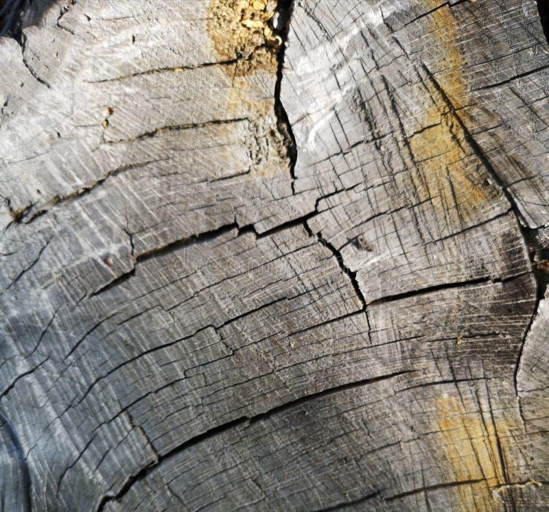 干燥橡木树桩纹理晴朗的夏天天气 库存照片
