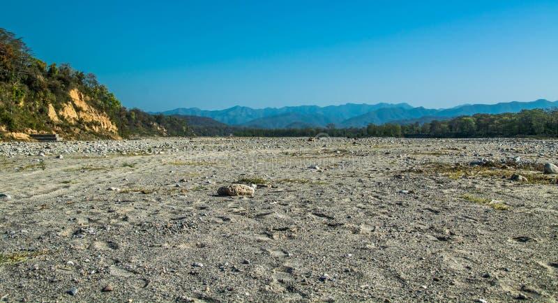 干燥河在森林里 免版税图库摄影