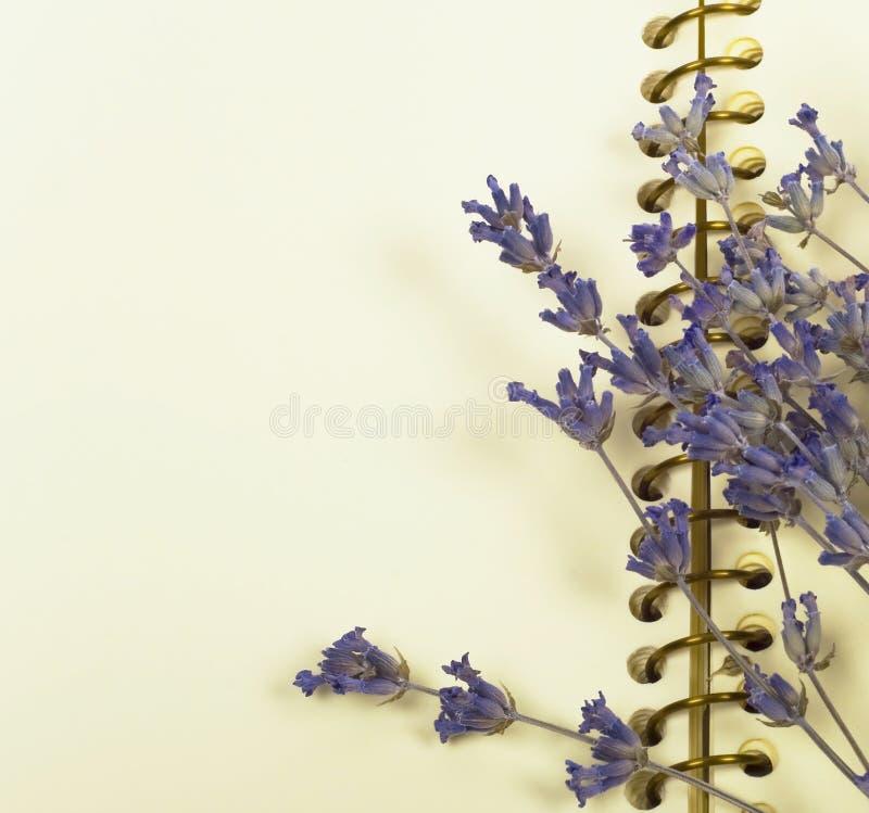 干燥淡紫色笔记本 库存照片