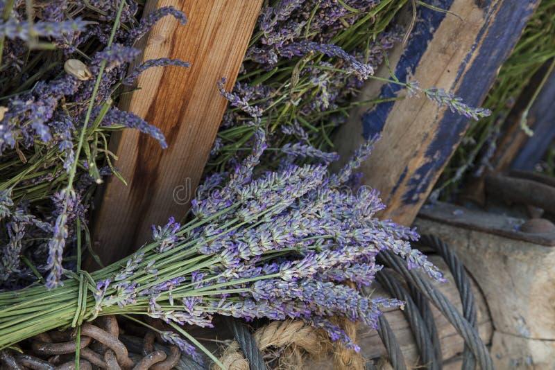 干燥淡紫色花花束  库存照片