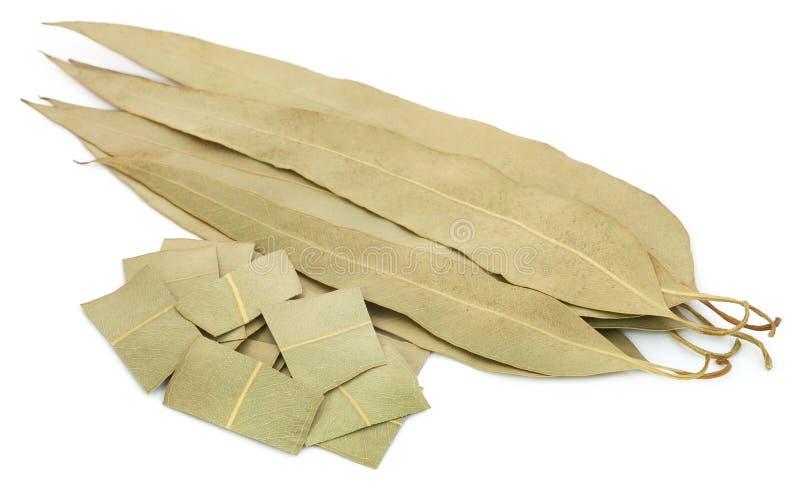 干燥玉树叶子 免版税图库摄影