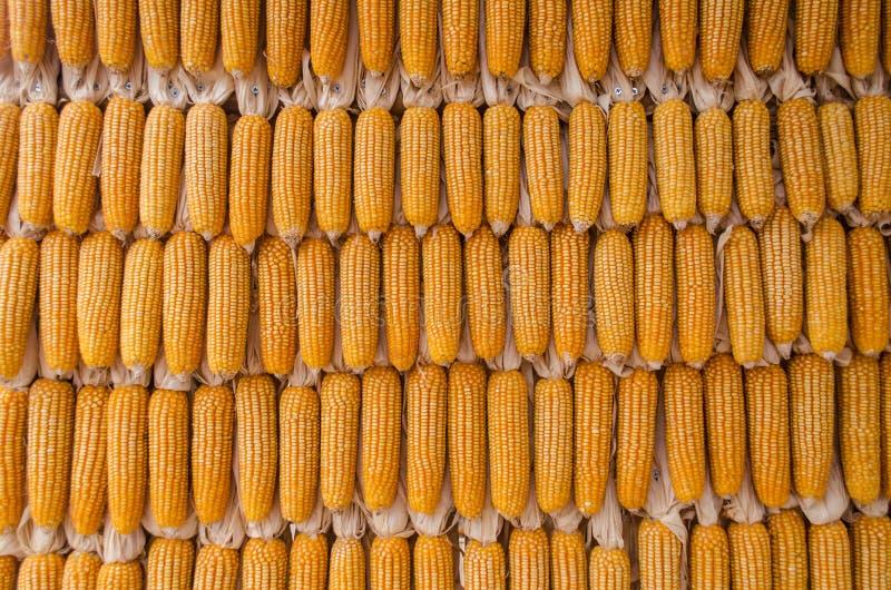 干燥玉米墙壁 库存图片