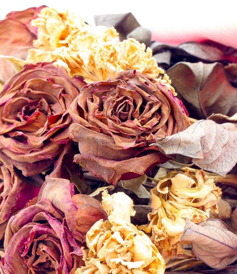 干燥玫瑰 免版税库存照片