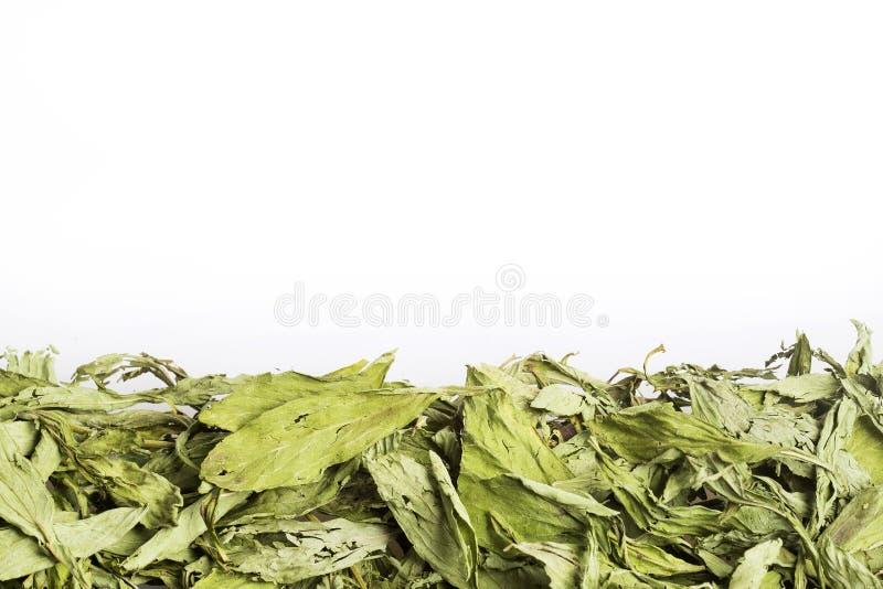 干燥甜叶菊叶子-甜叶菊rebaudiana 库存图片
