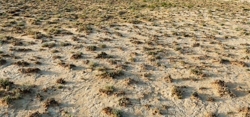 干燥矮小的地形植被 免版税库存照片