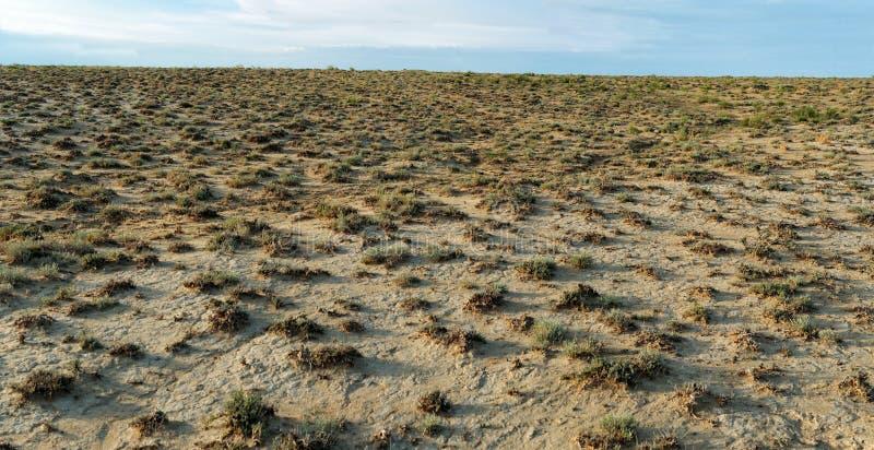 干燥矮小的地形植被 库存图片