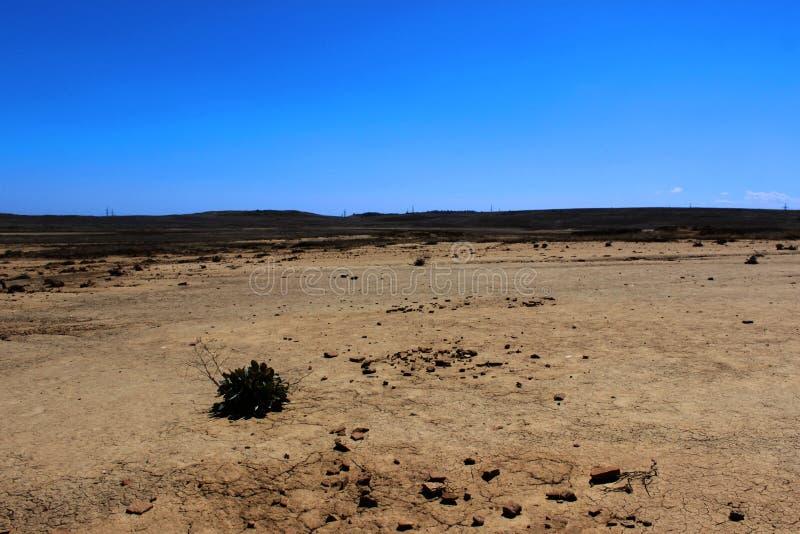 干燥破裂的地球纹理与镇压的在泥火山谷  罕见的生存植物,天旱 库存照片