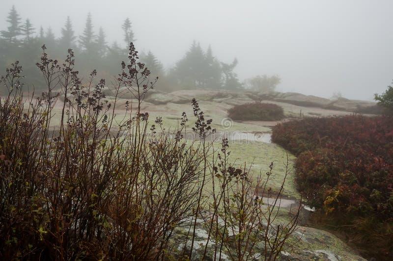 干燥秋天在雨下落开花在森林沼地 多雨有雾的多云秋天天 免版税库存图片