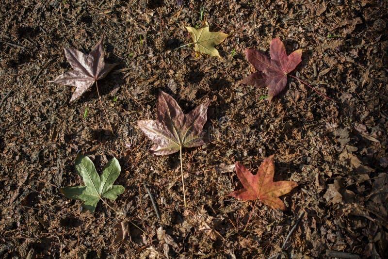 干燥秋天时间叶子视线内 免版税库存图片