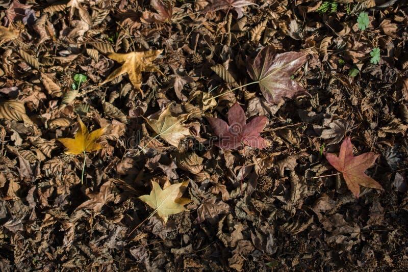 干燥秋天时间离开视线内 免版税库存图片