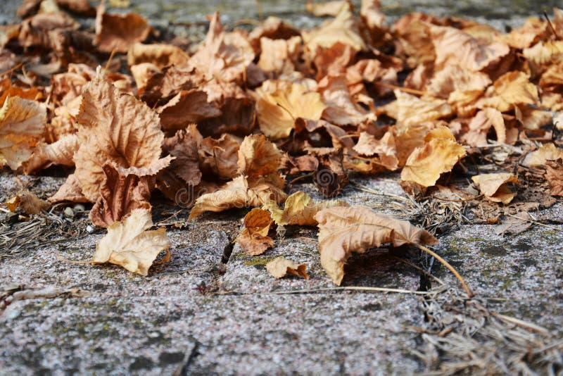 干燥秋天褐色在领域,自然本底离开 库存图片