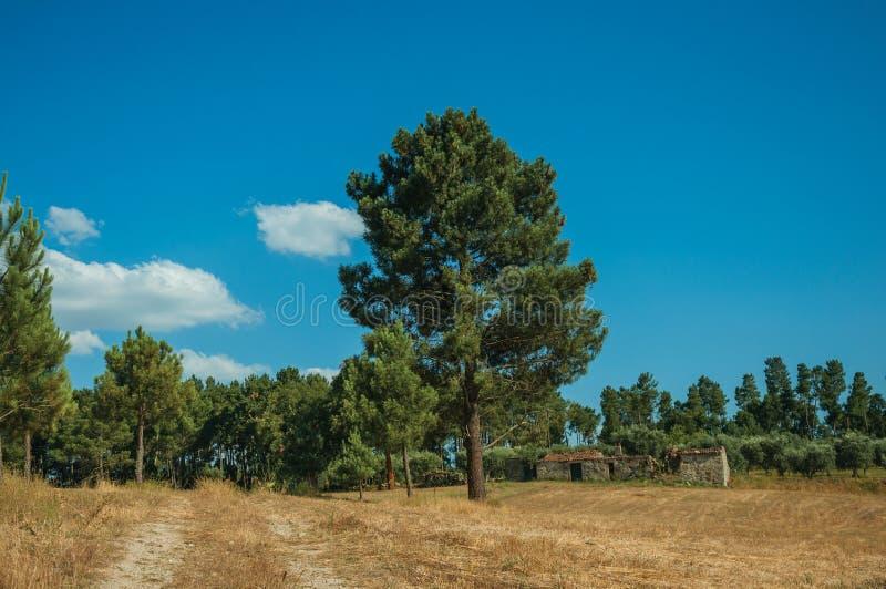 干燥秸杆和老农舍报道的领域 免版税库存照片
