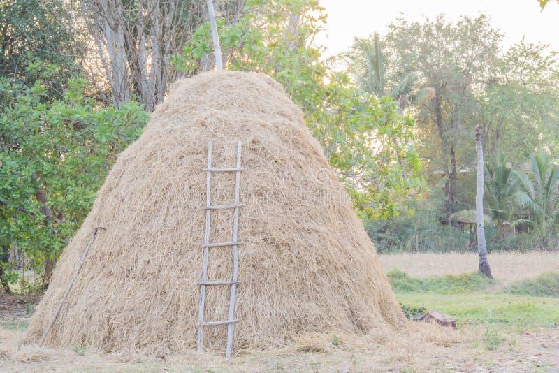 干燥秸杆在国家 库存照片
