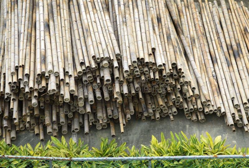 干燥竹堆 图库摄影