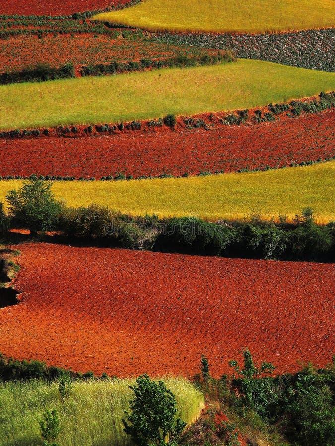 干燥红色土壤云南 免版税图库摄影