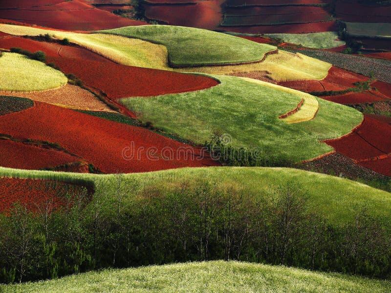 干燥红色土壤云南 库存图片