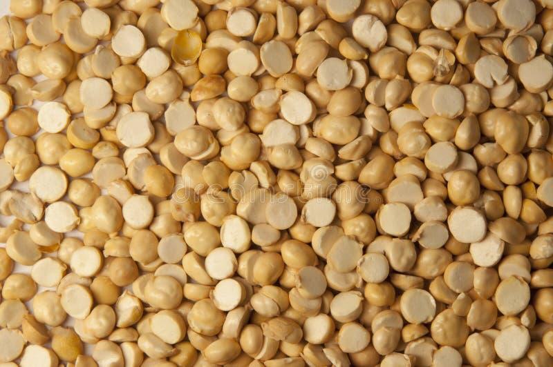 干燥背景的鸡豆 免版税库存照片