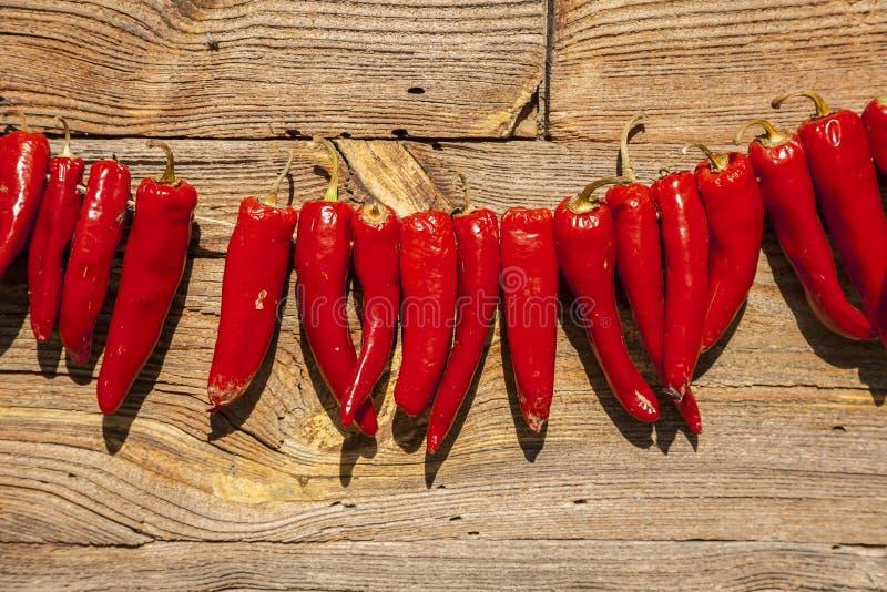 干燥胡椒在阳光下 免版税图库摄影