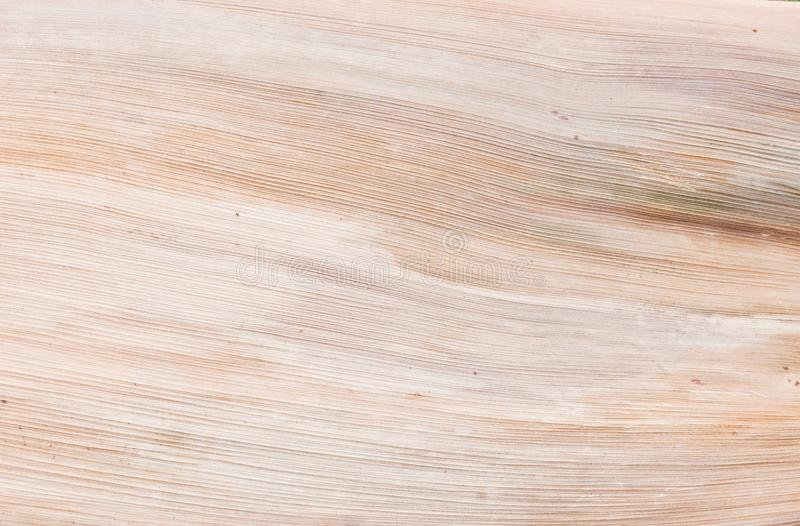 干燥自然棕榈叶,有机纹理 免版税库存图片