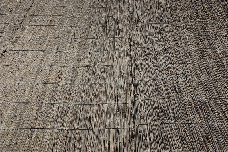 干燥芦苇灰色植物生长的纹理在屋顶的 库存照片