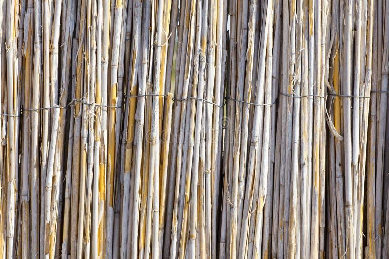 干燥芦苇的纹理 篱芭由芦苇制成 屋顶用芦苇盖 干草 藤茎 免版税库存照片