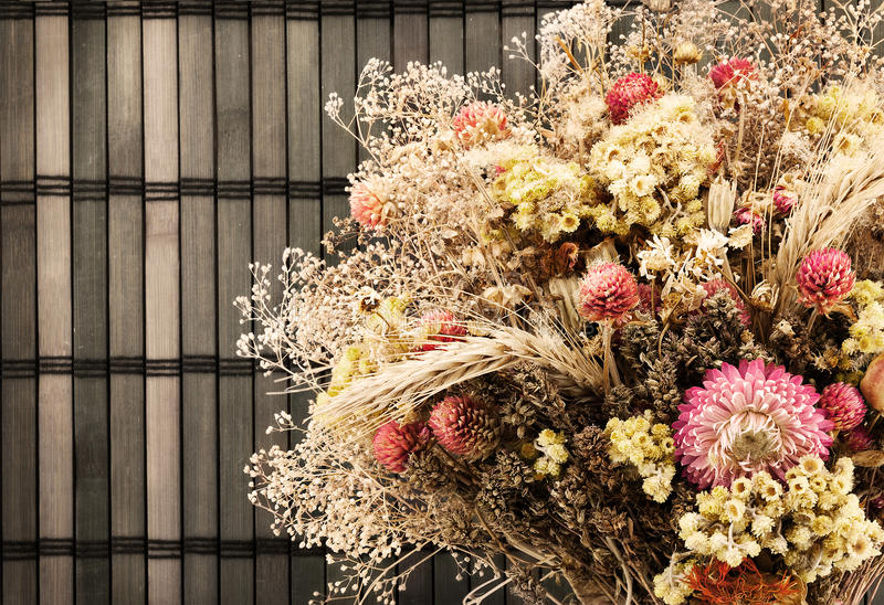 干燥花。 免版税库存图片