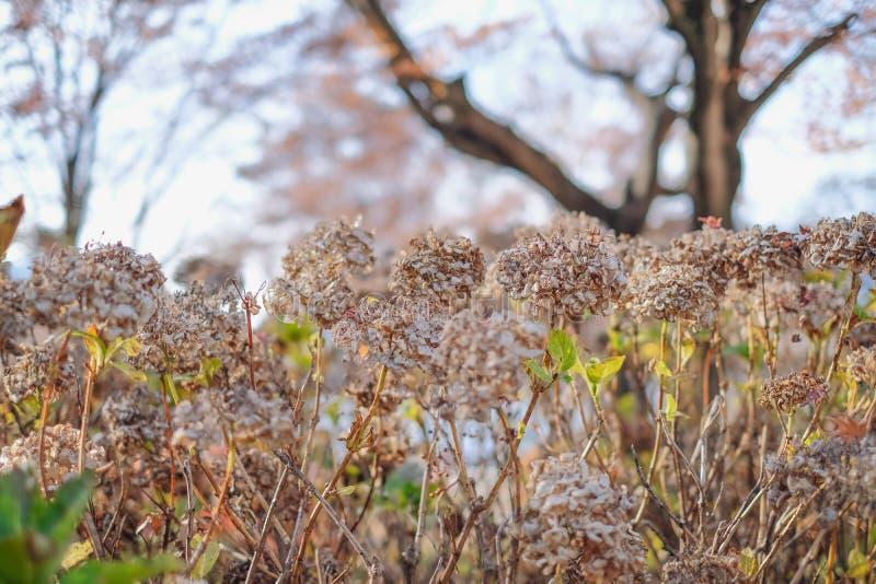 干燥花在秋天季节背景中 库存图片