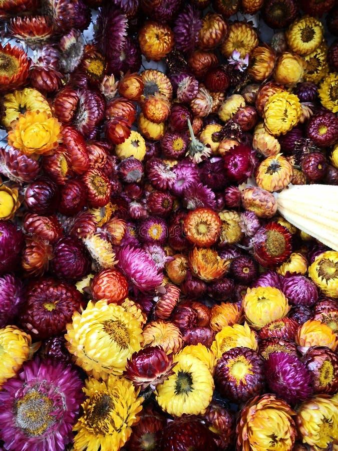 干燥花:在黄色的一点雏菊,紫色 免版税库存照片