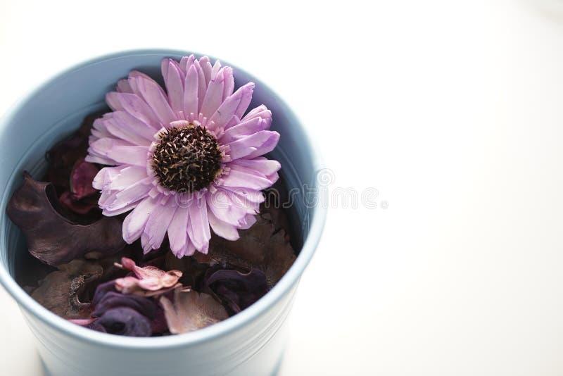 干燥芳香的花 免版税库存照片