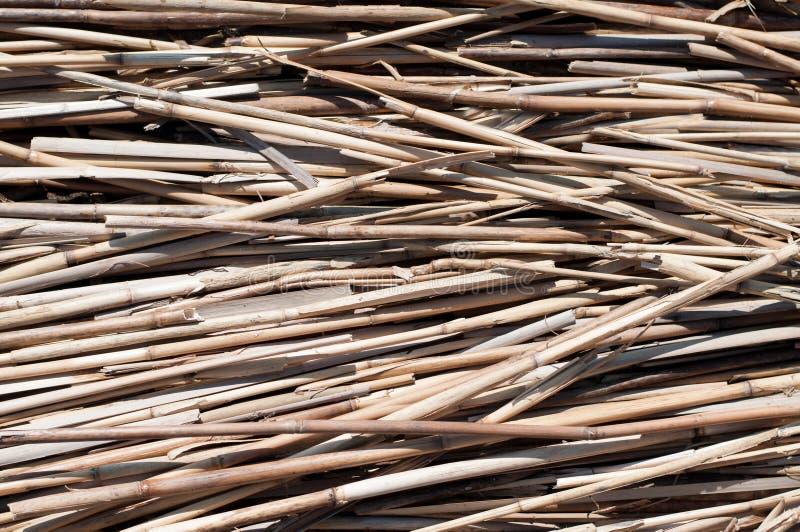 干燥藤茎作为背景 免版税库存图片
