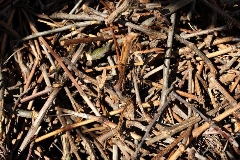 干燥裁减藤草丛纹理在混乱堆的 库存图片