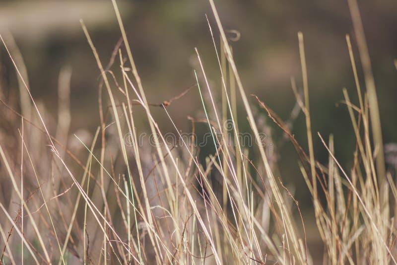 干燥领域草 免版税库存照片