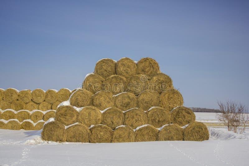 干燥黄色圆的干草堆在行在以在白雪背景的一座金字塔的形式在一清楚的天空蔚蓝下 库存图片