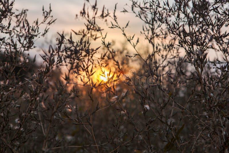 干燥黄色草草甸在日落日出阳光下 秋天在是 免版税库存照片