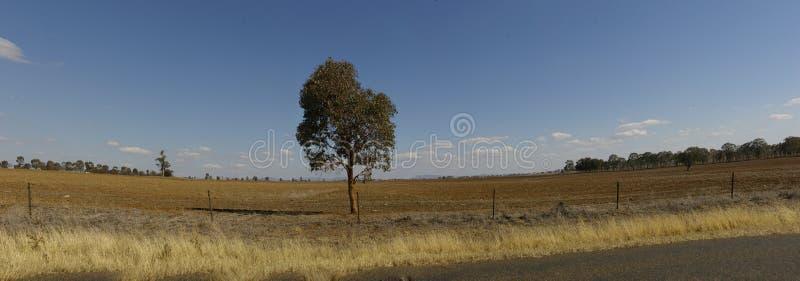 干燥,多灰尘,遭受干旱的贫瘠农田全景  库存图片