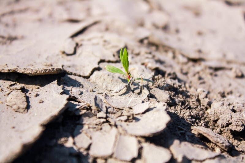 干燥破裂的地面和绿色新芽 库存照片