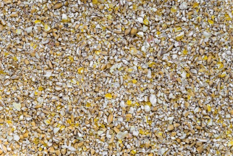 干玉米和麦子被击碎的五谷  免版税库存照片