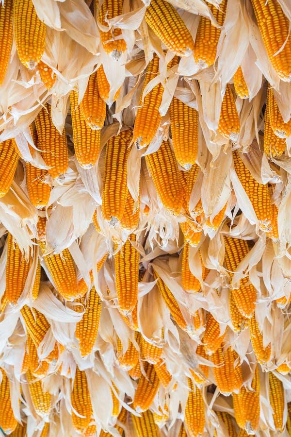 干玉米 库存照片