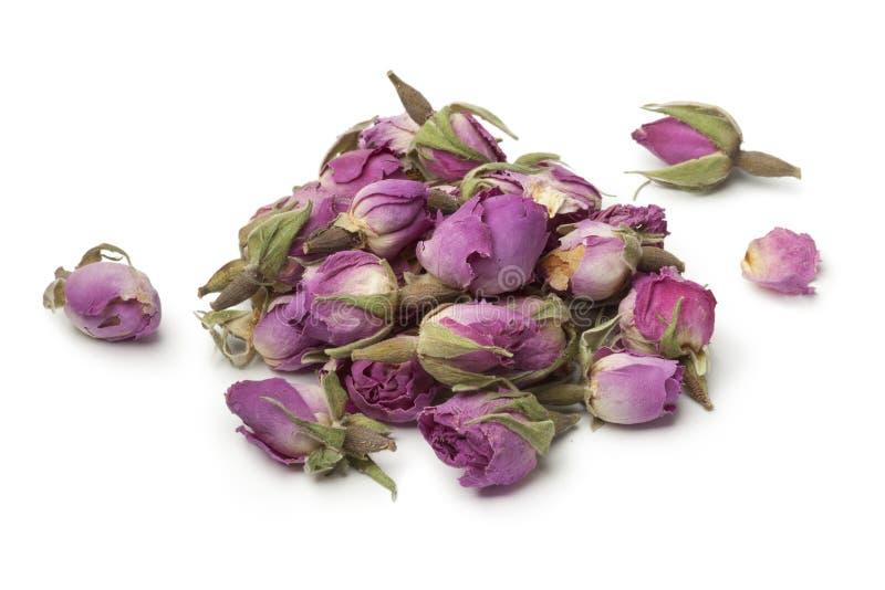 干玫瑰色芽堆  免版税库存图片
