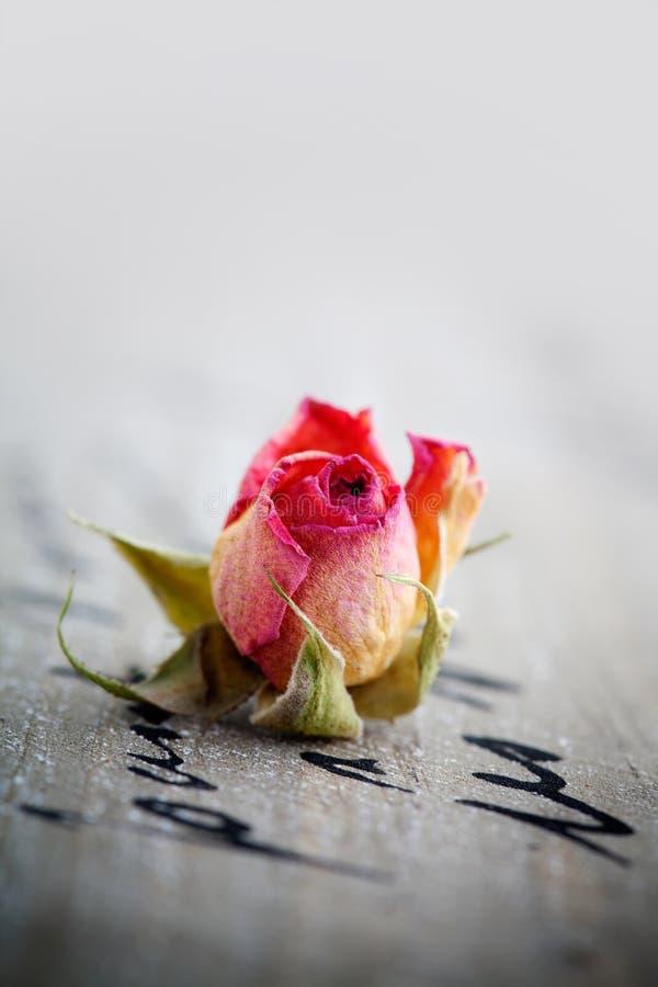 干玫瑰 库存照片