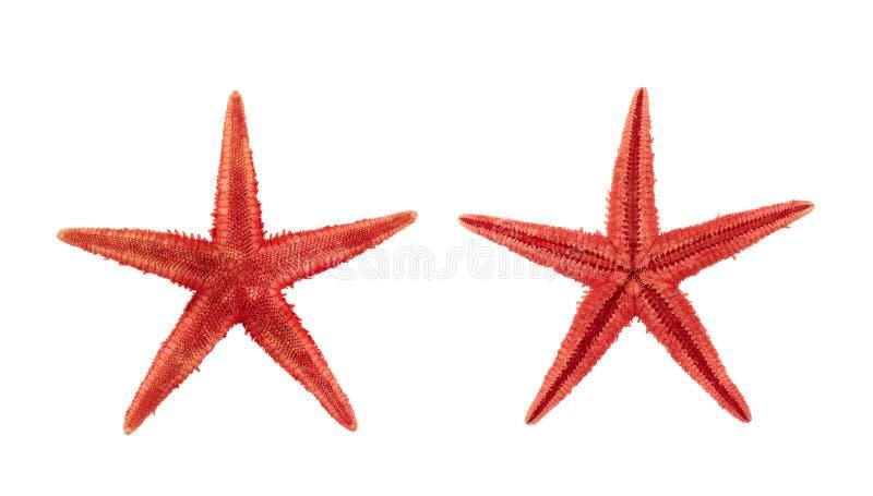 干红海海星装饰 免版税库存图片