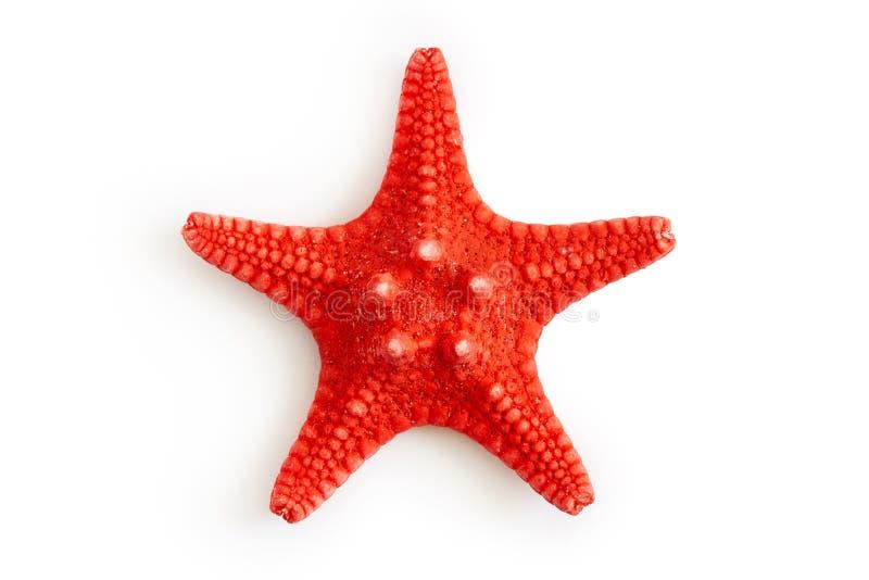 干红海海星 免版税库存图片