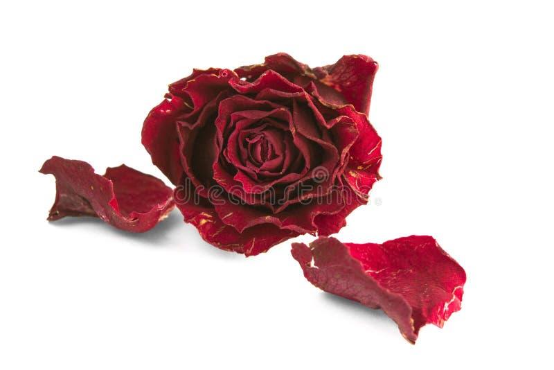 干红色玫瑰和两个瓣 免版税库存图片