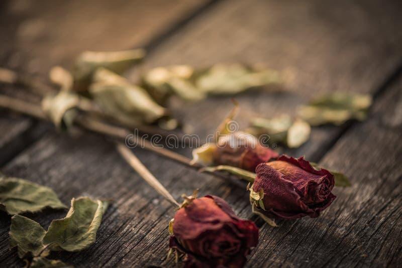 干红色玫瑰,死与两红色心脏的红色玫瑰在woodeng 免版税图库摄影