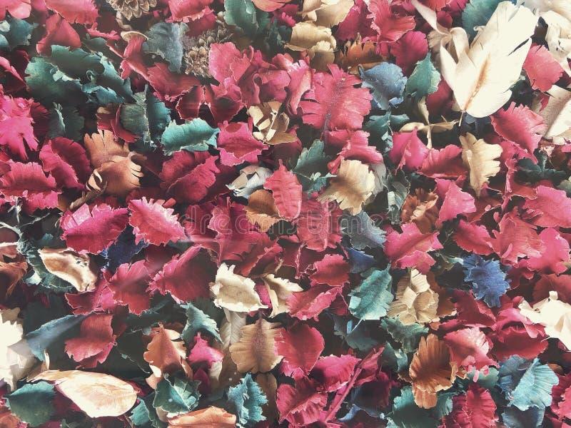 干花和叶子杂烩 免版税库存图片
