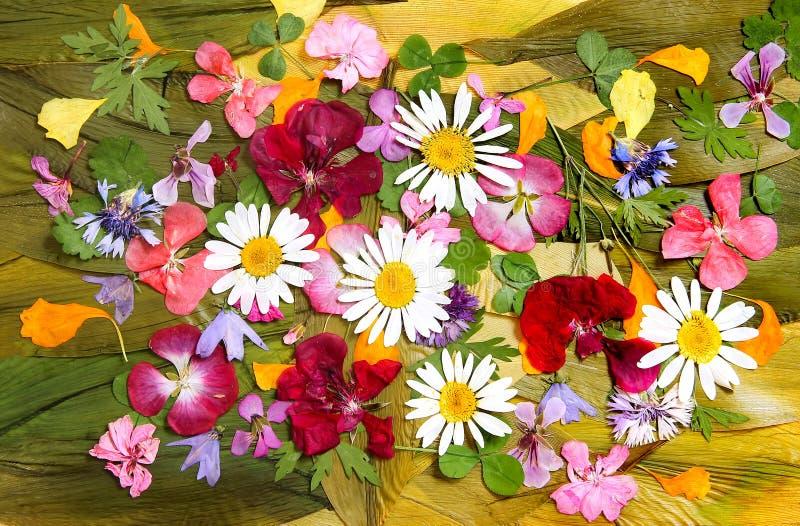 干花杂色的多彩多姿的补花  图库摄影