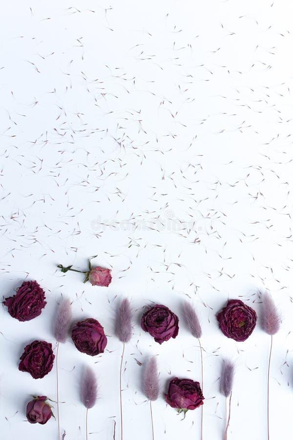 干花淡紫色,紫色和桃红色lagurus和玫瑰与种子在白色桌面 在白色背景的顶视图墙纸 免版税图库摄影